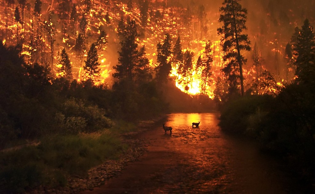 Forest fire, US Government image
